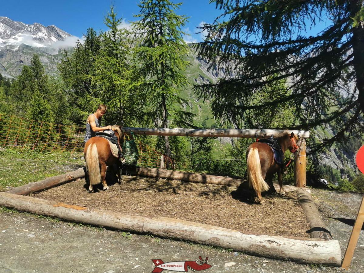 les poneys du mini zoo d'Ovronnaz.