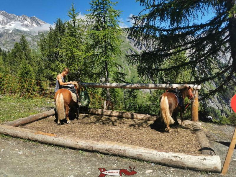 Les poneys en attente. mini zoo d'Ovronnaz