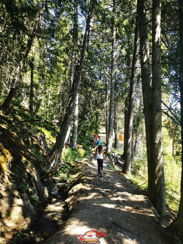 Un passage dans la forêt. bisse du Tsittoret
