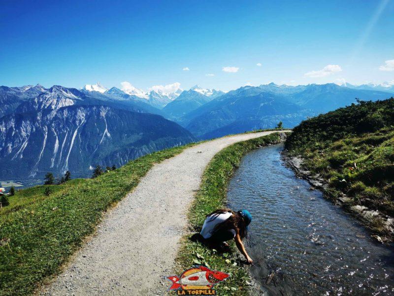 Le bisse du Tsittoret à avec l'énorme vue sur les Alpes.