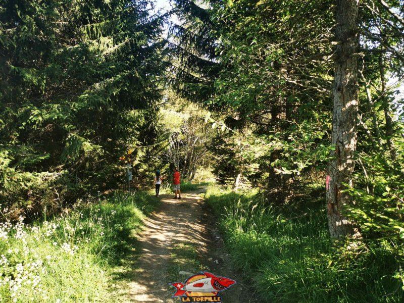 Un passage dans la forêt en forte descente. bisse du Tsittoret