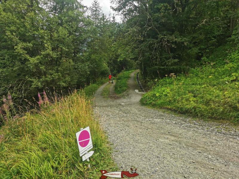 Le chemin croise le bisse de Saxon, le plus long bisse du Valais.
