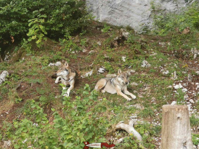 Loups juraparc