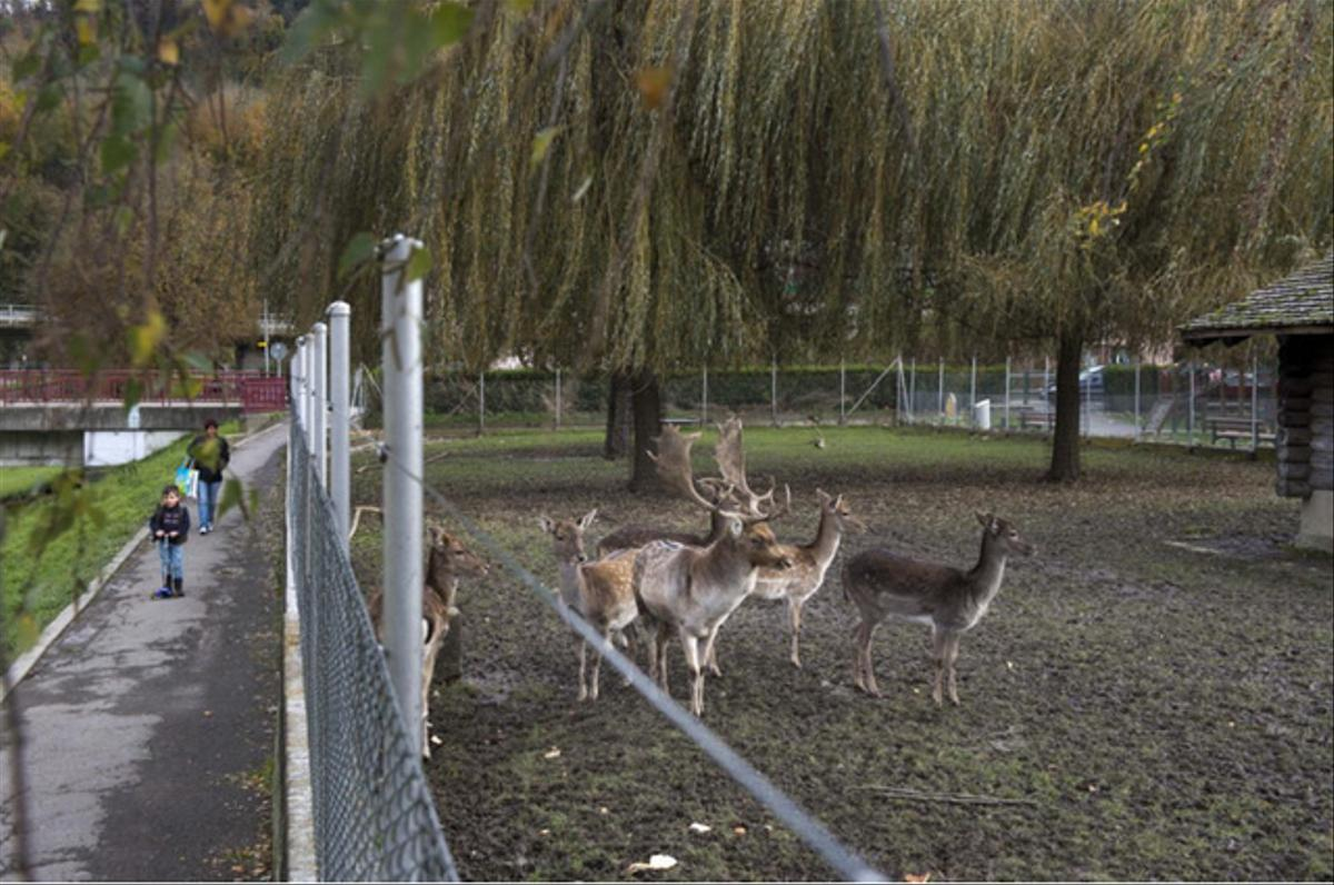 Le parc aux biches de Moudon.